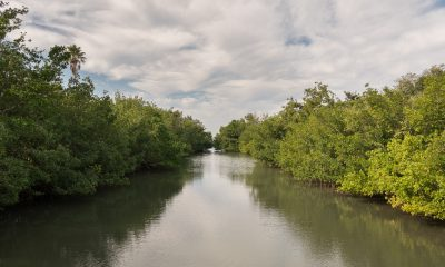 Mangroves The Bay Sarasota