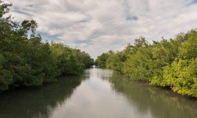 Mangroves The Bay Sarasota