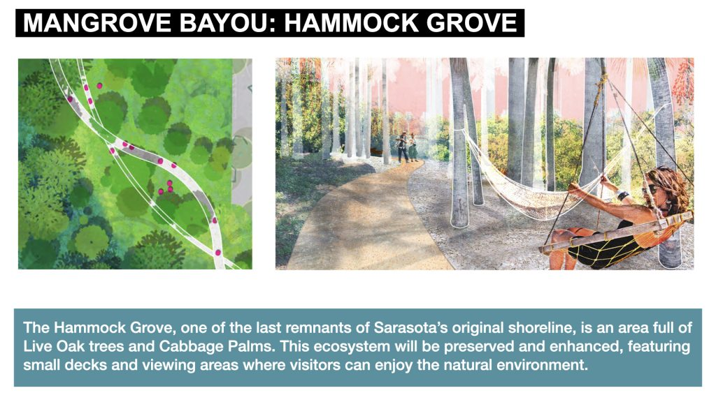 The Hammock Grove, one of the last remnants of Sarasota's original shoreline, is an area full of Live Oak trees and Cabbage Palms. This ecosystem will be preserved and enhanced, featuring  small decks and viewing areas where visitors can enjoy the natural environment.