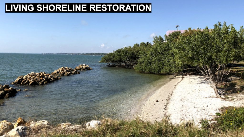 Living Shoreline Restoration