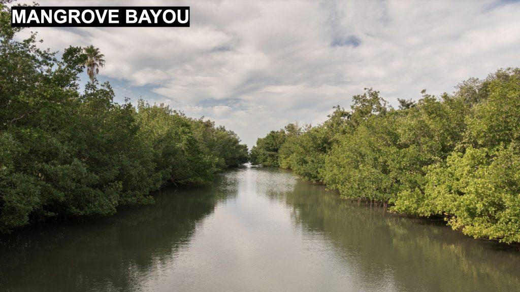 Mangrove Bayou